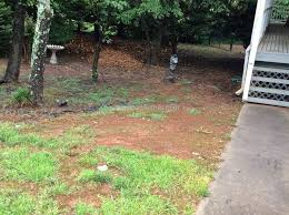 trugreen lawn service review 209236