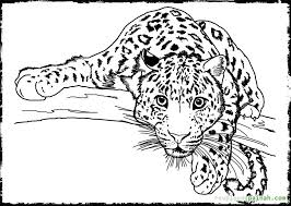 Small Picture Detailed Animal Coloring Pages For Adults Art Pinterest Kids