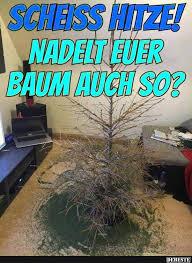 Hitze Nadelt Euer Baum Auch So Lustige Bilder Sprüche Witze