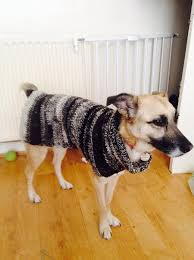 lileth collects unwanted undercoat fur from owners and turns it into fur coats for less fortunate dogs who have no fur yes that was the sound of my heart