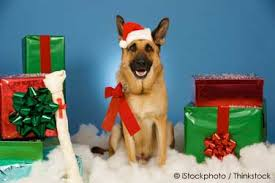 Pet dogs also love Christmas gifts