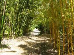 san go botanical garden