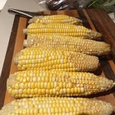 photo of the garden brooklyn ny united states inedible corn kernels
