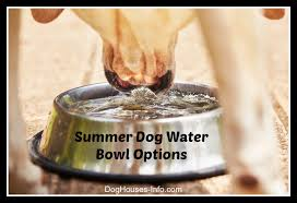 outdoor dog water bowl