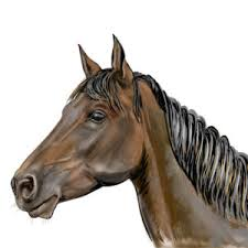 horse face side. Brilliant Horse Head Of Horse Drawing From The Side View U2013 Tutorial With Horse Face Side