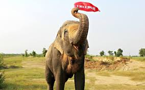 full size of home insurance home owners insurance company house insurance quote elephant auto insurance