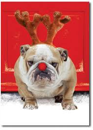 Bulldog Christmas Cards - Christmas Decor Ideas