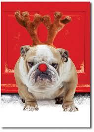 Bulldog Christmas Cards - Christmas Decor Ideas