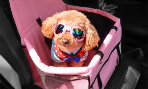 top 10 best dog car seats in 2018