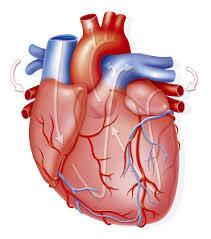 La inestabilidad económica es un factor de riesgo para el corazón