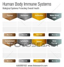 Human Body Systems Chart Human Body Immune Systems Chart Clipart K55300153 Fotosearch