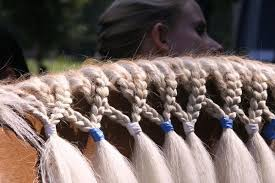 Pin by Alyce Hartwig on Manes | Horse braiding, Horse grooming ...