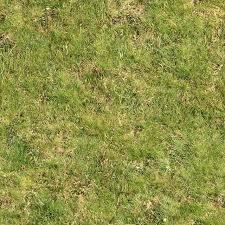 Seamless Green Grass Rough Maps Texturise Free Seamless Textures