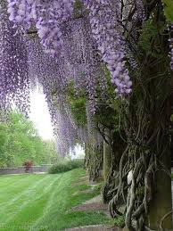 flower tree pictures.  Flower Purple Flower Tree And Pictures U