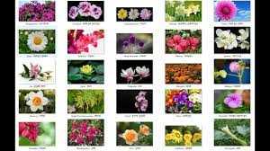 Flower names, Flowers name list ...