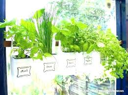 window herb garden kit windowsill herb garden kit window sill hanging milk jugs used containers gar