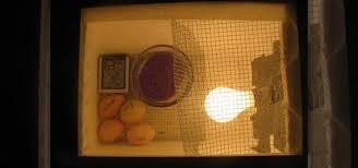 how to create your own homemade egg incubator