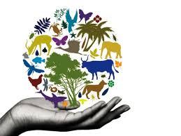 college essays college application essays biodiversity essay topics direct essays biodiversity