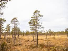 <b>Fjällräven</b> Hunting – Осень−зима 2020