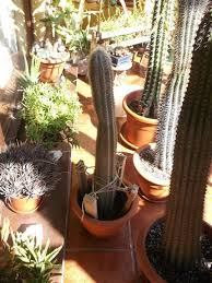 how to pot up and support a tall cactus cutting