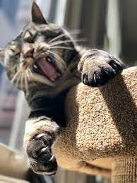 Scratch This Not That Why Cats Scratch How To Protect Your Furniture