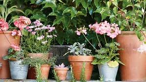 container gardening 7 steps to grow