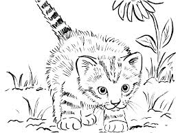 Wild Cat Coloring Pages Desert Wild Cat Coloring Page Coloring Pages