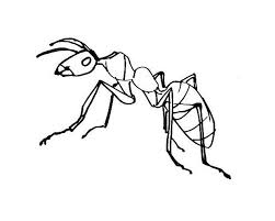 Small Picture Ant coloring pagessheets