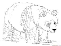 Small Picture coloring pages draw a panda bear adorable cartoon panda coloring