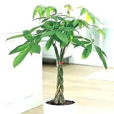 office plants no light. Office Plant Light Small Astounding Design Plants No Remarkable
