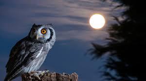 night owl moon hd wallpaper desktop
