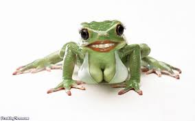 Frog with big tits