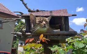 Vogelfutterplatz Katzensicher Machen Kaffee Und Kuchen