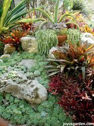 a beautiful garden showcasing succulents bromeliads