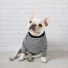 modern dog clothing and accessories from pipolli  animals
