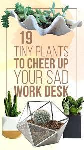 best indoor office plants. Office Desk Plants Best Indoor L