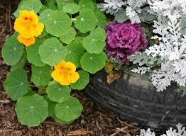 how to plant a garden. Tire Garden How To Plant A