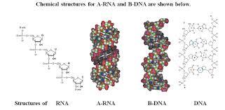 Bridged Nucleic Acid Revolvy
