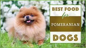 Pomeranian Puppy Feeding Chart 9 Best Healthiest Dog Food For Pomeranians In 2019