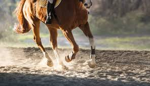 Health Review Best Joint Supplement For Horses 2019