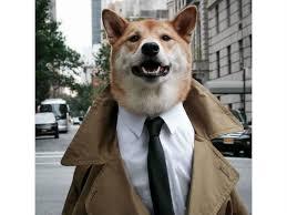 in the trench coats mensweardog