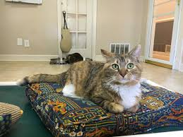 To Caffeinate, Cuddle And Adopt, Go To Atlanta's Forthcoming Cat Cafés    90.1 FM WABE
