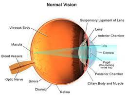 Eye Diseases Chart Corneal External Eye Diseases University Of Utah Health