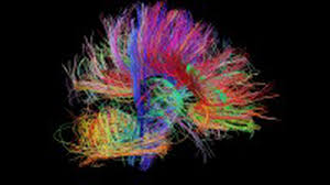 how the brain s wiring forms thoughts and emotions