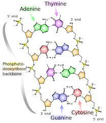 3 2 Hydrogen Bonds Chemistry Libretexts
