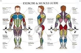 The Human Man Exercise Muscular System Anatomical Chart