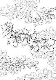 30+ Tranh tô màu hoa Mai đẹp nhất