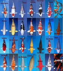 Image Result For Koi Fish Color Chart Kolam Ikan Kolam