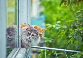 Katzenfensterschutz Das Fenster Katzensicher Machen