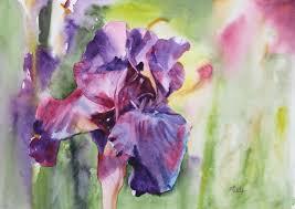 iris bleu adyne gohy